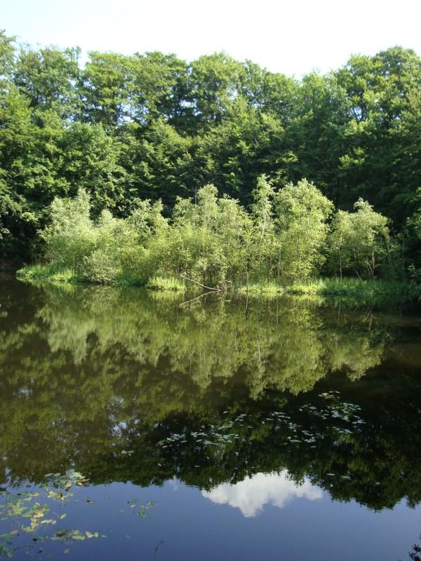 tl_files/bilder/wandern/Der K 1/B 9 Schwimmende Insel.jpg